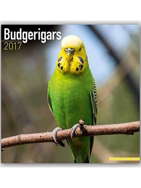 Kalender Budgerigars Wellensittich 2017
